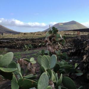 Cactus and Volcanos, Lanzarote