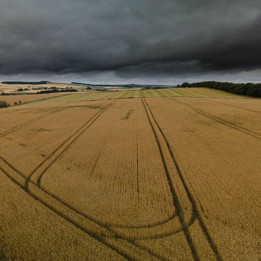Almost Ready for Cutting ⠀⠀⠀⠀⠀⠀⠀⠀⠀ .⠀⠀⠀⠀⠀⠀⠀⠀⠀ .⠀⠀⠀⠀⠀⠀⠀⠀⠀ #crops #farming #stormsky #agriculture #agripics #aberdeenshire #bestofourshire #loveaberdeenshire #visitabdn #scotlandscenery #yourscotland #scotlandgreatshots #aberdeenblogger #Tifty #Fyvie #fromwhereidrone #mavic #drone_captures #droneofficials #dronenature #dronesoftoday #dronesofearth #dji #dronelife #dronestagram #dronephotography #droneshots #droneoftheday #fromwhereidrone #dronepilot