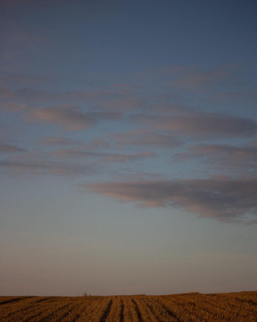 Sunset ⠀⠀⠀⠀⠀⠀⠀⠀⠀ .⠀⠀⠀⠀⠀⠀⠀⠀⠀ .⠀⠀⠀⠀⠀⠀⠀⠀⠀ #crops #wheat #stubble #farming #agriculture #agripics #aberdeenshire #bestofourshire #loveaberdeenshire #visitabdn #scotlandscenery #yourscotland #scotlandgreatshots #aberdeenblogger #Tifty #Fyvie