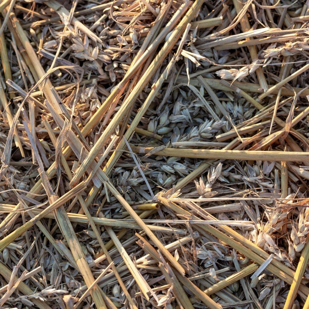 A good feed left over for the birds⠀⠀⠀⠀⠀⠀⠀⠀⠀ .⠀⠀⠀⠀⠀⠀⠀⠀⠀ .⠀⠀⠀⠀⠀⠀⠀⠀⠀ #crops #wheat #stubble #farming #agriculture #agripics #aberdeenshire #bestofourshire #loveaberdeenshire #visitabdn #scotlandscenery #yourscotland #scotlandgreatshots #aberdeenblogger #Tifty #Fyvie