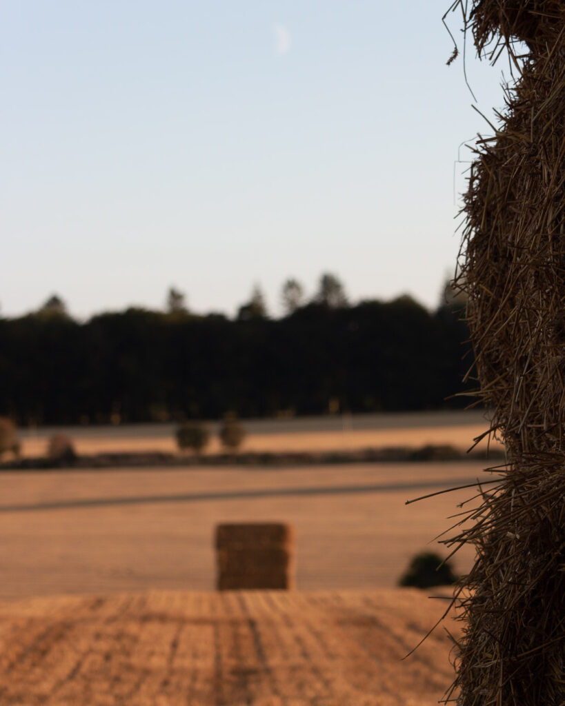 Bales in the sunset.⠀⠀⠀⠀⠀⠀⠀⠀⠀ .⠀⠀⠀⠀⠀⠀⠀⠀⠀ .⠀⠀⠀⠀⠀⠀⠀⠀⠀ #crops #wheat #bales #farming #agriculture #agripics #aberdeenshire #bestofourshire #loveaberdeenshire #visitabdn #scotlandscenery #yourscotland #scotlandgreatshots #aberdeenblogger #Tifty #Fyvie